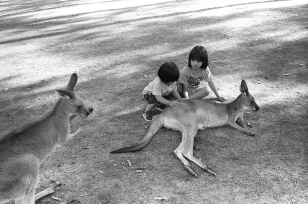 265-1_kangaroosyehey